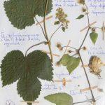 Approfondissement sur les plantes sauvages (annulé)