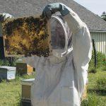 Ateliers Apiculture respectueuse, initiation à l'apiculture familiale- Cycle n°1 - x 4 séances - COMPLET