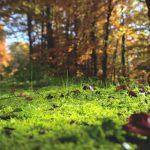 Jusqu'à l'étang de la Challoire (RDV Nature en Anjou) - GRATUIT (annulé)