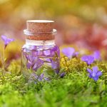 Réaliser son Elixir Floral entre musique et alchimie (selon le Dr Bach)